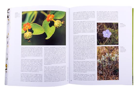 Foto 3 do produto Sítios de Interesse Botânico de Portugal Continental