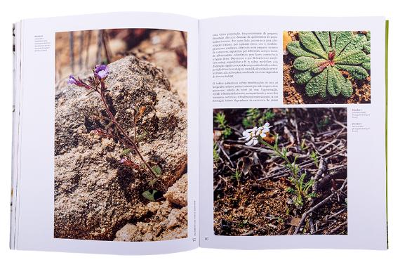 Foto 5 do produto Sítios de Interesse Botânico de Portugal Continental